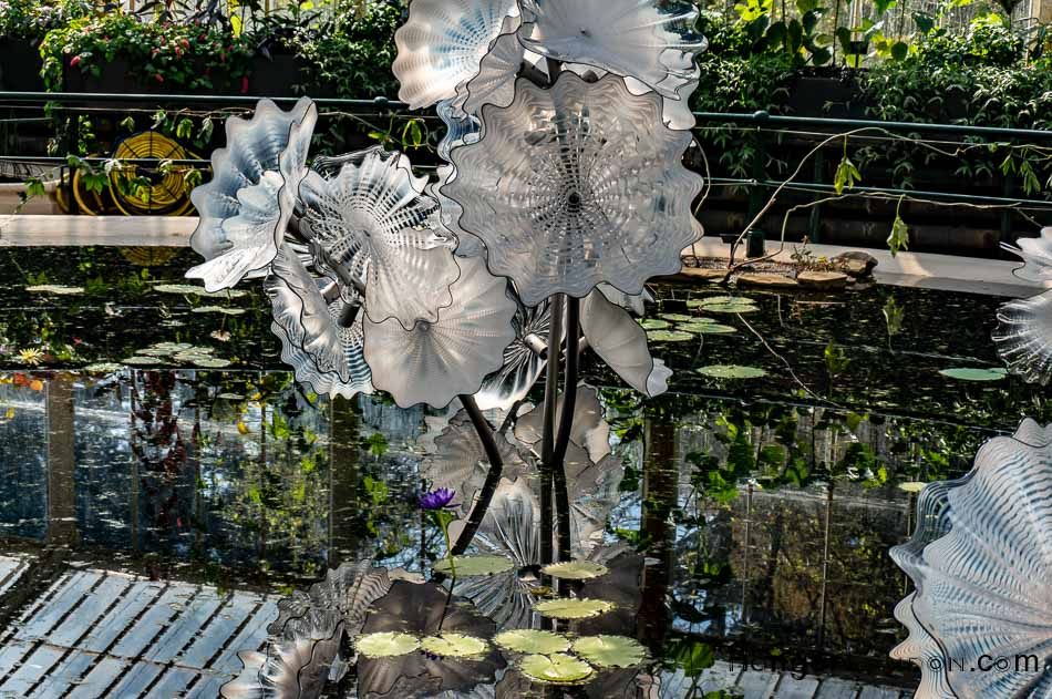 White Glass by Chihuly Kew Lily hse. Ethhereal White Persian Pond