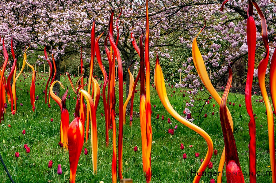 Chihuly Blown Glass Exhibit 1